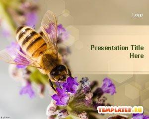 Шаблоны о природе для презентаций