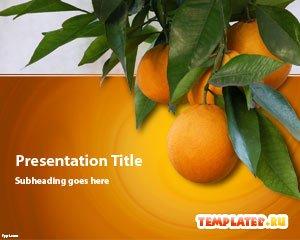 Шаблон PowerPoint Оранжевые апельсины