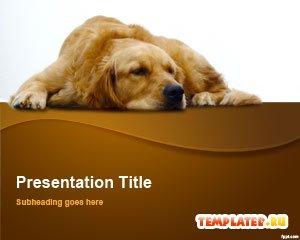Шаблон PowerPoint Коричневый ретривер