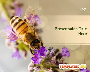 Шаблон PowerPoint Пчела на цветке