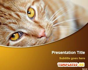 Шаблон PowerPoint Коричневый кот