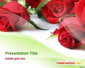 Шаблон PowerPoint Красные розы