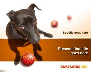 Шаблон PowerPoint Собака с мячом