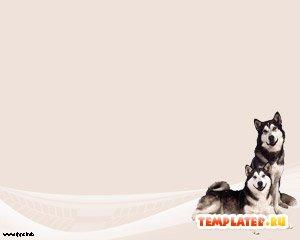 Шаблон PowerPoint Собаки Хаски