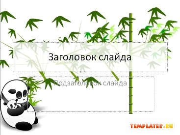 Шаблон PowerPoint Панды